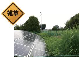 周辺の雑草が太陽光発電システムのモジュールを隠している